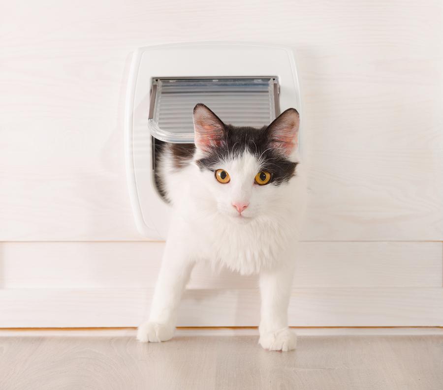 praktisches gadget f r die mieze die katzenklappe mit sensor. Black Bedroom Furniture Sets. Home Design Ideas